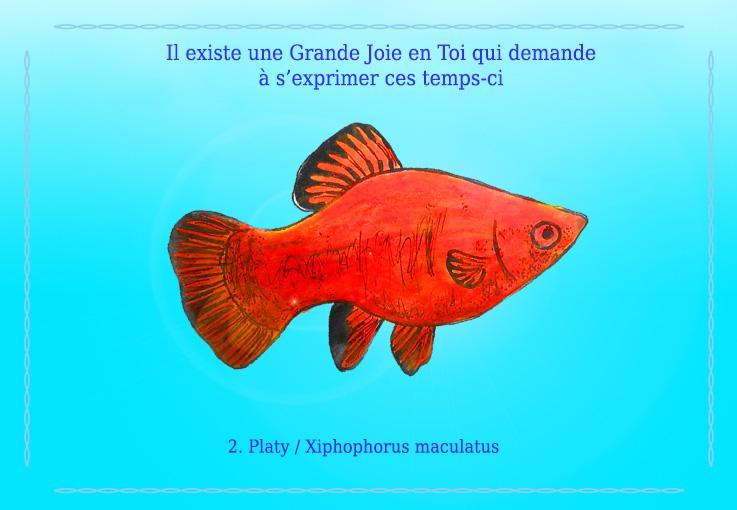 Xiphophorus maculatus